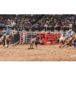 Rodeo Systems